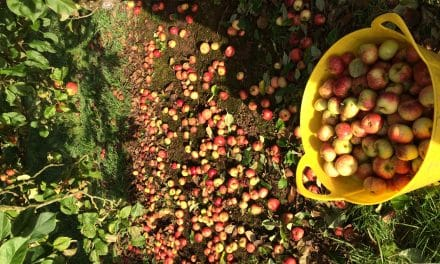 Growth Support Programme: Smith Hayne Orchards
