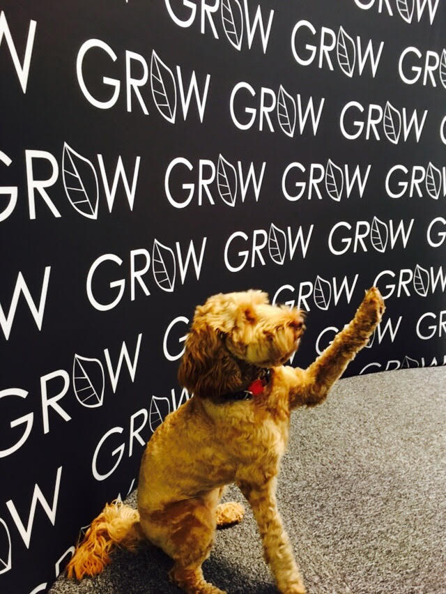 Grow petworking