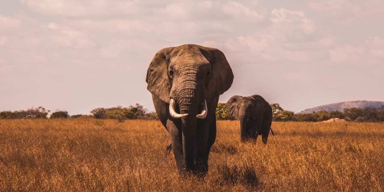 Kenya Is Poaching Its Poachers With The Help Of Technology