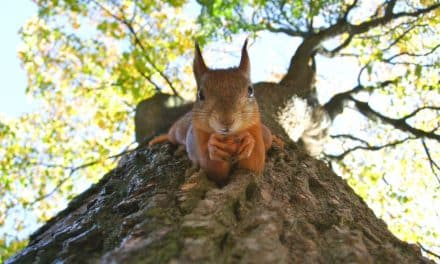 Prince Charles Is Nuts About Squirrels!