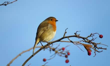 RSPB Urges Us To Look After Our Garden Birds This Winter