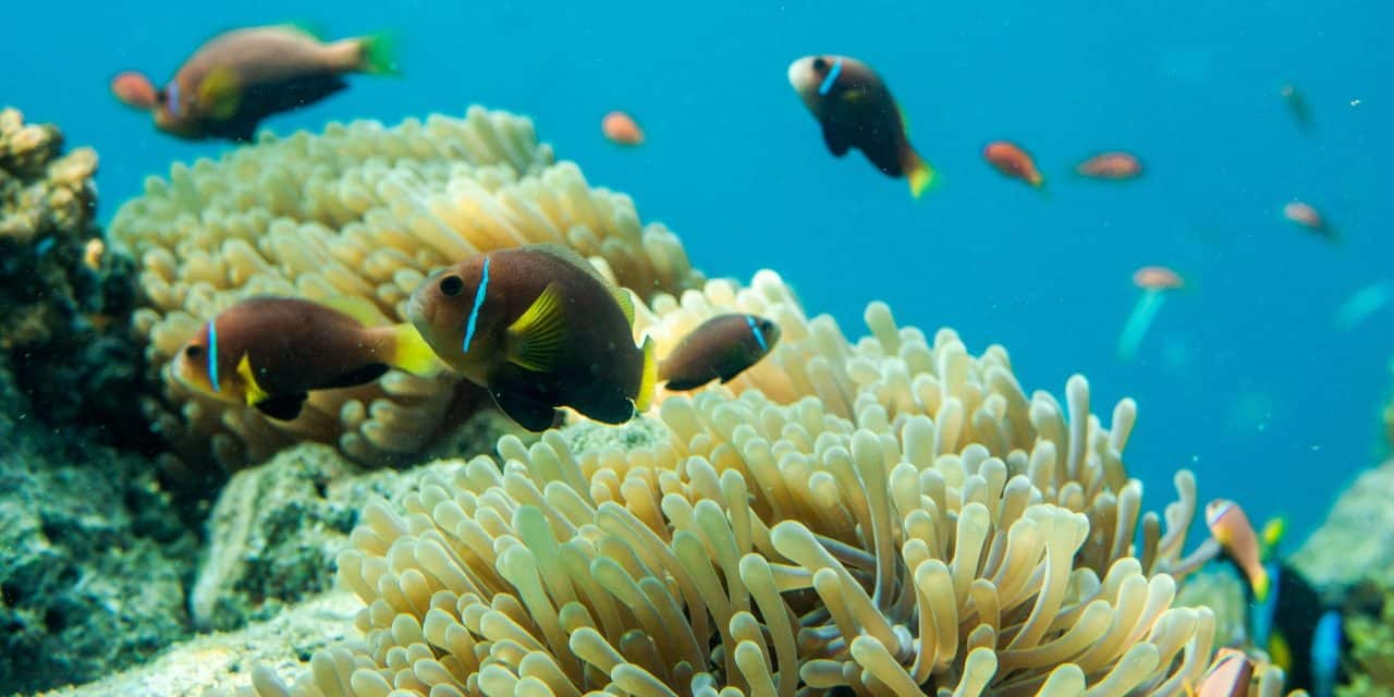 New Interventions Announced To Save World's Coral Reefs