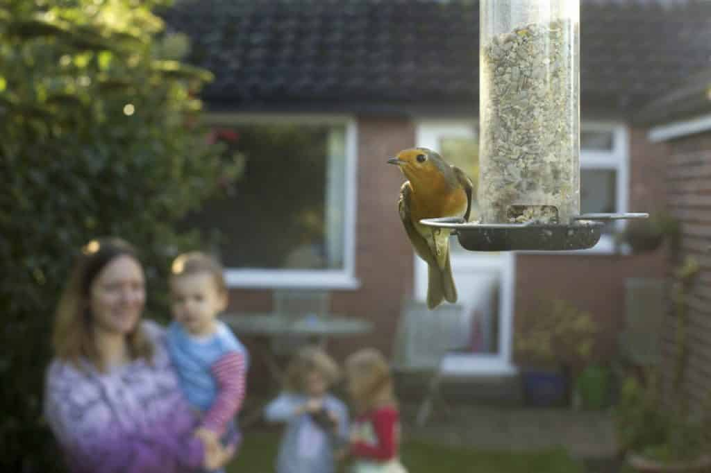 RSPB Big Garden Birdwatch Grow