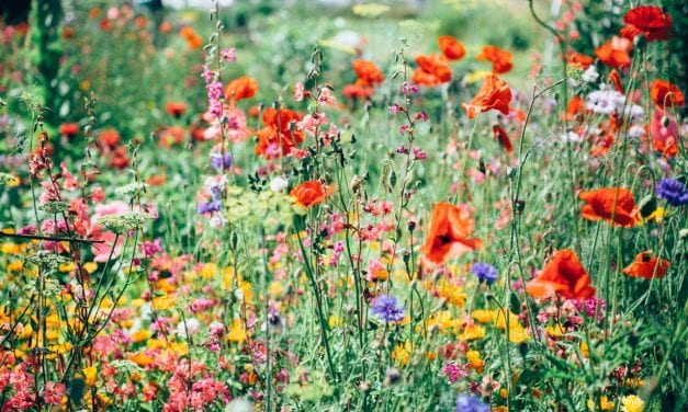 Blooming Lovely; Wildflowers Are Back In Exeter