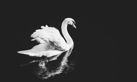 Hypno4Swans: Get Out of Your Head – Naturally