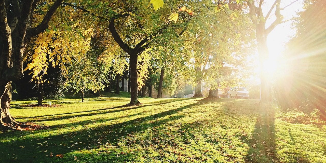 Exeter Based Treeconomics Launches Project To Investigate Urban Trees