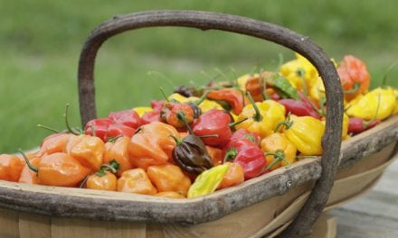 South Devon Chilli Farm: Some Like It Hot