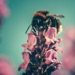 Beevive Need Your Help To Save Our Bees!