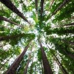 STC Expeditions Launches Trees For Life Project