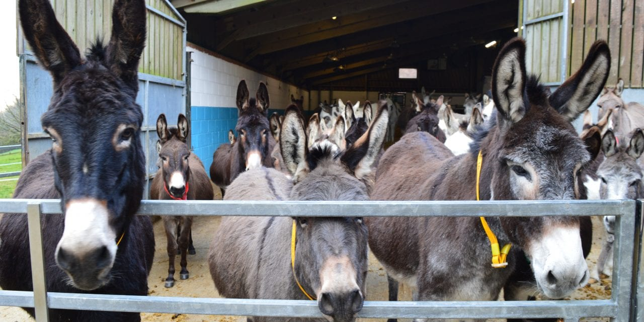 M&S Spreads Christmas Cheer To Donkeys
