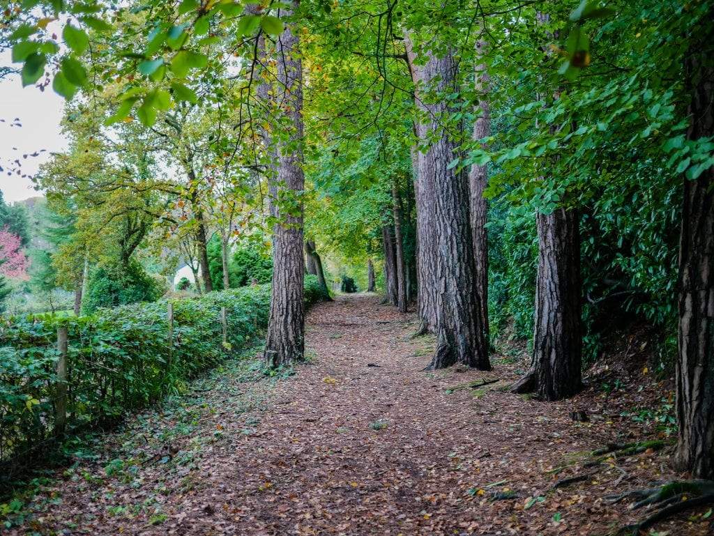 autumn trees path avenue