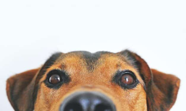 RSPCA To Restart Rehoming & Fostering Animals During Crisis