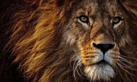 NEW KENYAN LION COUNT IS THE CAT'S WHISKERS!