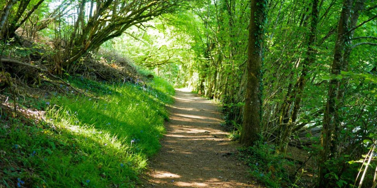 Tips To Enjoy A Beautiful Walk Away From Devon's Hotspots