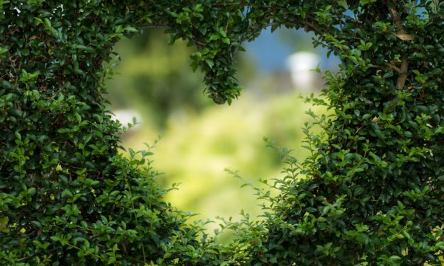 LOCAL BUSINESS #ILOVEMYGARDEN PHOTOGRAPHY COMPETITION AIMS TO RAISE DEVONIANS' SPIRITS & FUNDS FOR CHARITY