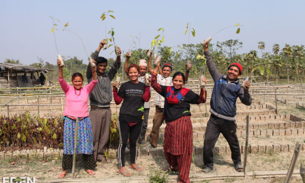 INDEPENDENT COMPANY IS ON A 'TREEMENDOUS' QUEST TO PLANT 1 BILLION TREES TO HELP OFFSET CARBON FOOTPRINT GENERATED BY BUSINESSES