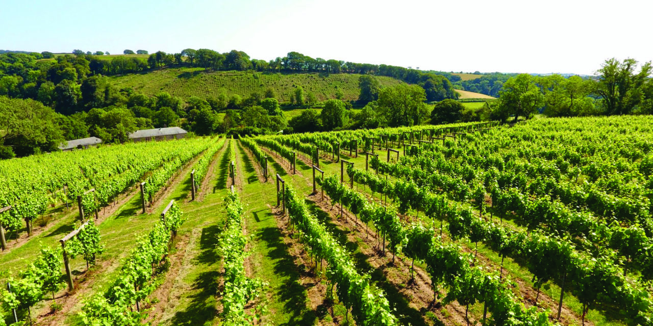 Calancombe Estate Vineyard, Winery and Distillery Opens to Visitors