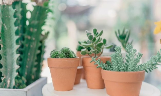 THE BOTANIST CELEBRATES OPENING COUNTDOWN WITH POP-UP PLANT SHOP THIS WEEKEND